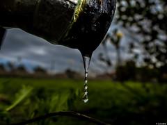 A cuentagotas (Luicabe) Tags: naturaleza de agua exterior ngc luis gota aire libre zamora cabello grifo macrofotografa yarat1 enazamorado luicabe