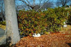 Today's Cat@2016-01-16 (masatsu) Tags: cat sigma catspotting thebiggestgroupwithonlycats dp0quattro