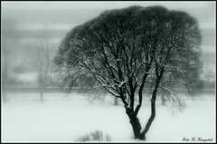 The tree (K. Haagestad) Tags: winter mist snow tree fog branches