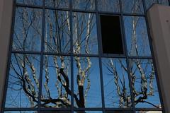 Une fentre ouverte sur un reflet d'hiver (Pi-F) Tags: hiver 100v10f reflet fentre vitre platanes