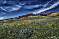 Hallucination (MarcCooper_1950) Tags: flowers mountains clouds landscape flora nikon hills wildflowers hdr purpleflowers lightroom d810 extremehdr marccooper dramatichdr intensehdr aurorahdr