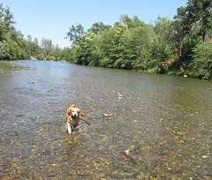 2012-07-14 14.48.03 (heatherbees) Tags: dog creek chico buttecreek