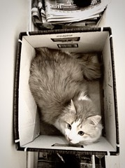 Cat in a box. A Triptych somehow (TikoTak) Tags: blackandwhite monochrome cat chat triptych box gatto triptyque bote noiiretblanc
