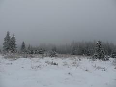 IMG_8667 (Bike and hiker) Tags: winter mist hiver sneeuw neige venn hoge hautes fagnes venen hohes botrange neur bayehon low