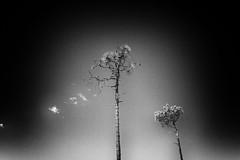 IMG_2386 (storvandre) Tags: liguria varazze casanova panorami savona storvandre