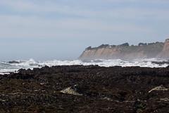 IMG_7981 (armadil) Tags: beach scenic beaches lowtide tidepools tidepool mavericks californiabeaches