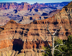Grand Canyon (miemo) Tags: travel arizona cliff usa mountain mountains tree nature landscape spring lasvegas grandcanyon olympus canyon trunk vista omd matherpoint olympus1240mmf28 em5mkii