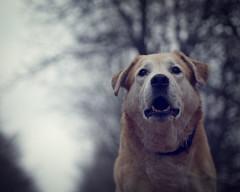 2016-03-10_18-56-23 (torstenbehrens) Tags: bokeh olympus panasonic hund f18 alter dmcg1 m45mm