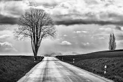 lanscape without rainbow (Narzouko) Tags: road morning sky blackandwhite cloud tree wet rain digital switzerland suisse noiretblanc may dramatic pluie route mai ciel nuage paysage arbre numérique 70200 lanscape contrejour matin humide 24x36 dramatique 70200f4lis grosdevaud canon5dmkii 5d2 nzk narzouko