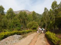 Starting out on first walk (Jackie & Dennis) Tags: india wayanad rwh kalpetta bansura ramblersworldwideholidays kuttiyamvayall spicesplantationshillstations banasuraislandretreat