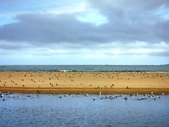 Praia Amrica 01 un da de lluvia (Pepe Fernndez) Tags: autumn mar paisaje nubes otoo olas gaviotas panxn nigrn playaamrica praiaamrica