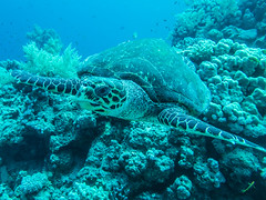 IMG_0890 (eye[4]eye) Tags: egypt diving gypten tauchen bluewaves