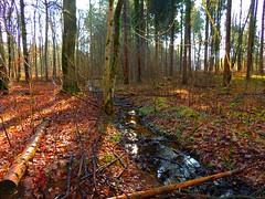 Stille im Fluss (Sophia-Fatima) Tags: forest deutschland bach brook wald niedersachsen walsrode nikonflickraward