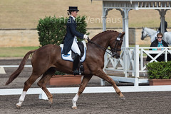 160407_2016_SydneyCDI_107.jpg (FranzVenhaus) Tags: horses test sydney australia nsw judge newsouthwales aus equestrian riders dressage siec