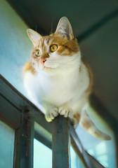 cat under the roof (lera_abrakadabra) Tags: cats pets pastel rustic meow cutecats catface gingercat cuteanimals tenderly animalphotography catlovers mintblue lovelycat petslovers