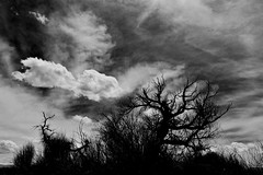 When the lights go down... (KWinters Photography) Tags: shadow sky bw white black tree nature monochrome grass silhouette clouds dark landscape colorado flickr outdoor gray whiteandblack nikkon d5500 nikob