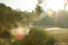 Misty morning (thomas_warren2000) Tags: morning mist thomas brisbane warren