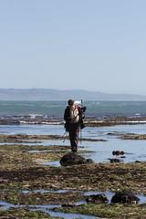 IMG_3723 (armadil) Tags: beach beaches mavericks californiabeaches