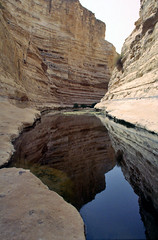 En Avdat, kloof en bron in de Negev Woestijn, Isral 1994 (wally nelemans) Tags: canyon 1994 source bron isral kloof negevdesert enavdat negevwoestijn