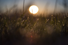 Unfocused mood (jarnasen) Tags: abstract macro grass closeup sunrise nikon soft mood distorted bokeh dreamy unfocused waterdrops nikon50mmf18 d810