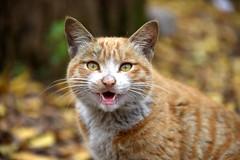 Cat (MelindaChan ^..^) Tags: china pet animal cat guilin kitty mel melinda guangxi 桂林 廣西 chanmelmel melindachan 小平樂 海洋鄉