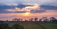 _DSC8198 (Rosemarie Dekert) Tags: trees winter sunset sun landscape evening march berkhamsted 2016