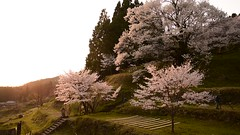 30Butsuryuji Temple (anglo10) Tags: sunset japan cherry temple