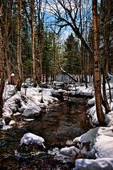 Spring Run-off (Knarr Gallery) Tags: trees winter sky snow ice pine creek landscape spring nikon stream huntsville scenic birch muskoka runoff 18200mmf3556gvrii