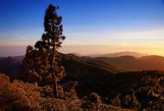 Sundown at Pico De Las Nieves, Gran Canaria. (PeteB72) Tags: sunset grancanaria landscape volcano view sundown hills volcanic canyons goldenhour goldenlight recession laspalmasdegrancanaria picodelasnieves pinuscanariensis canaryislandpine