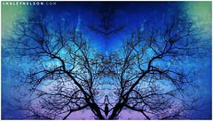 kaleynelsonsym19_1 (kaleynelson) Tags: trees abstract tree nature landscape meditate symmetry mirrored symmetric symmetrical meditation psychedelic spiritual chakra chakras alexgrey sacredgeometry kaleynelson