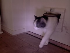 20160428-141615-i-1 (Catflap central) Tags: camera pet cats cat pi raspberry meow catdoor catflap kattenluik katzenklappe catflapj2nnl