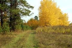 DSC_6016 (Rustam Bikbov) Tags: autumn september 2012    sverdlovskoblast
