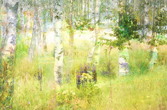 Birches in springtime SS (BirgittaSjostedt.) Tags: flower tree green texture beauty painting spring paint birch sliderssunday birgittasjostedt