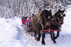 Horse Carriage at Fairmont Chateau Lake Louise (Tracysniche) Tags: park horse lake snow canada cold ice carriage ride louise national alberta banff chateau fairmont