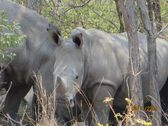 Zimbabwe (203) (Absolute Africa 17/09/2015 Overlanding Tour) Tags: africa2015