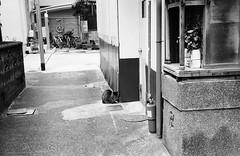 Sensitive to Cold (Purple Field) Tags: street bw film monochrome bicycle japan analog zeiss cat 35mm walking 50mm alley kyoto fuji iso400 rangefinder contax ii carl   neopan  ikon   guardian  presto  sonnar f20            stphotographia    ii