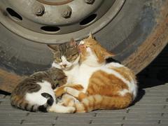 Good start to the day. (Vitaly Giragosov) Tags: cat canon sevastopol crimea крым кошки севастополь kittysuperstar sx50 sx50hs