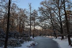 Frozen Horizon