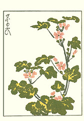 Tall mallow (Japanese Flower and Bird Art) Tags: flower art japan japanese book picture mallow tall malvaceae nagasaki woodblock malva sylvestris masayoshi kitao readercollection