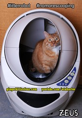 Litter Robot III Open Air (youtube.com/utahactor) Tags: red orange money yellow mackerel robot ginger discount no tabby watch like save follow litter whiskers more zeus buff share tomcat facebook subscribe coupon viral youtube scooping litterrobot nomorescooping