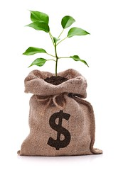 Money bag with dollar sign and money tree growing out of top iso (thienan01) Tags: brown white plant colour tree green nature vertical closeup photography leaf budget nobody rope full business growth whitebackground dollar studioshot growing savings sack ideas investment currency isolated banking wealth beginnings finance concepts moneytree moneybag dollarsign economicissues uscurrency nestegg burlapsack makingmoney isolatedonwhite businessgrowth moneydoesntgrowontrees