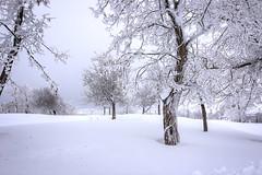 White Narnia. (jrseikaly) Tags: door winter lebanon white snow cold tree nature jack photography high dynamic narnia range arz hdr cedars seikaly jrseikaly
