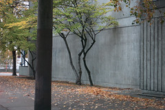 Growth Medium (Blinking Charlie) Tags: seattle autumn urban usa fall concrete bonsai washingtonstate 7thavenue japanesemaples firstpresbyterianchurch firsthill 2015 brutalistarchitecture madisonstreet canonpowershots110 blinkingcharlie