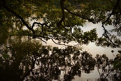 The Brooding Tree (sammarie396) Tags: plant reflection tree nature water wildlife sony brooding