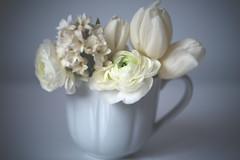112/365 (jtk_82) Tags: flowers roses white flower macro up rose close macrodreams