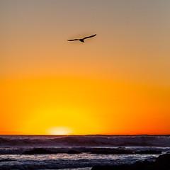 Glide (GavinZ) Tags: ocean california sun water square waves sandiego pacificbeach
