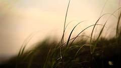 The Sound of Silence (ricdovalle) Tags: folhas nature leaves 50mm peace sony natureza paz calm silence alpha calma silncio a6000 sel50f18 ilce6000