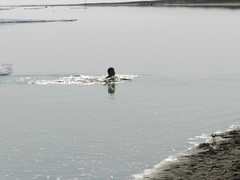 Going swimming at Long Point August 2015 40 (cambridgebayweather) Tags: swimming nunavut cambridgebay arcticocean