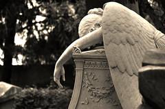 Cimitero Acattolico 1 (angelo del dolore di William Wetmore Story) (Maurizio Belisario) Tags: rome roma cemetery angel pain story angelo cry cimitero scultura dolore marmo pianto acattolico