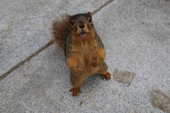 242/365/2798 (February 8, 2016) - Squirrels in Ann Arbor at the University of Michigan (February 8, 2016) - Explored! (cseeman) Tags: squirrels annarbor michigan animal campus universityofmichigan umsquirrels02082016 winter eating peanut acorns februaryumsquirrel snow snowy knothole squirrelcondo squirrelnest knotholehouse nest cavity cavitynest squirrelcavitynest treecavity umsquirrelcondo02082016 2016project365coreys yeareightproject365coreys project365 p365cs022016 356project2016 gobluesquirrels umsquirrel